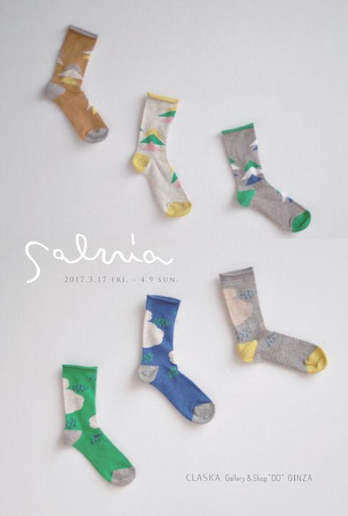 salvia_main